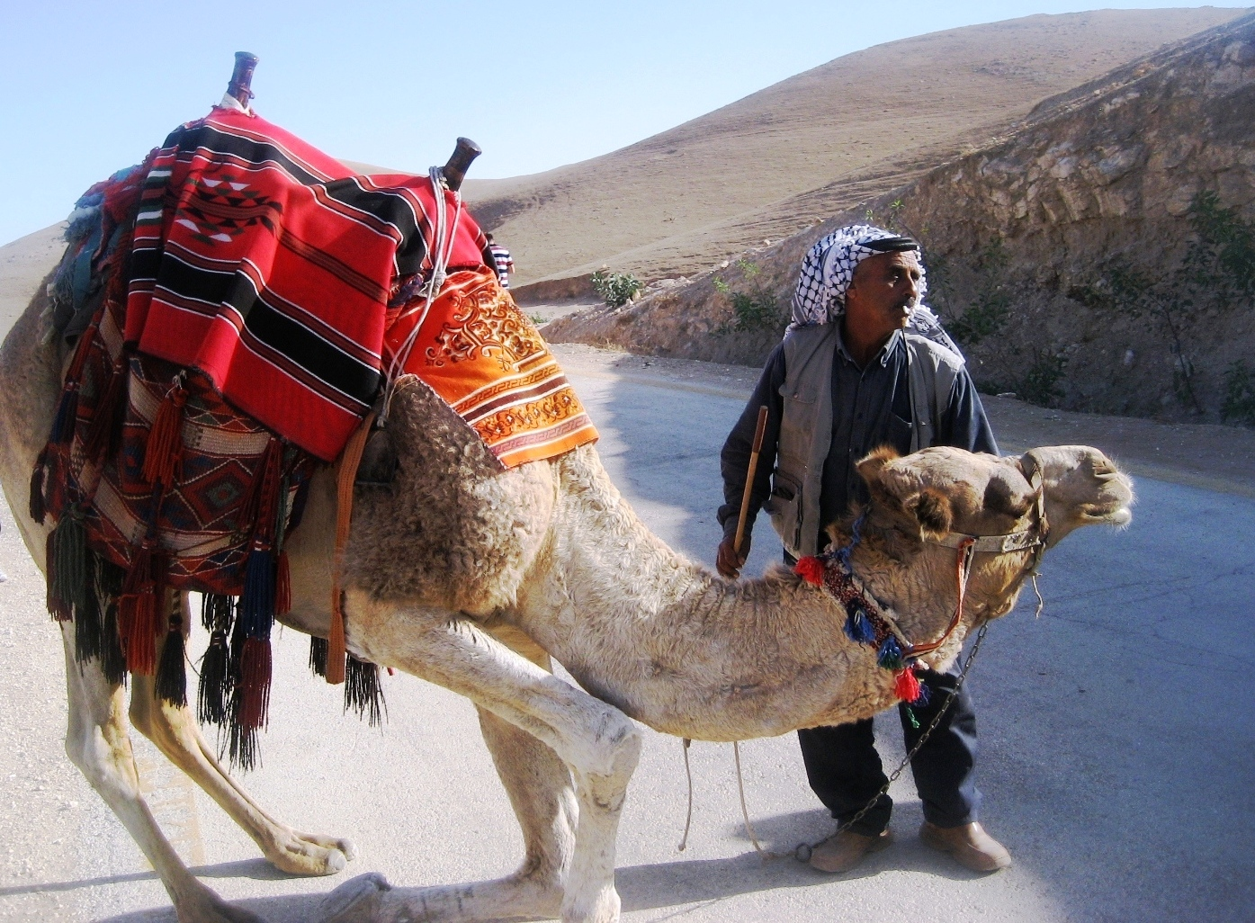 Camel Bends Down For Rider
